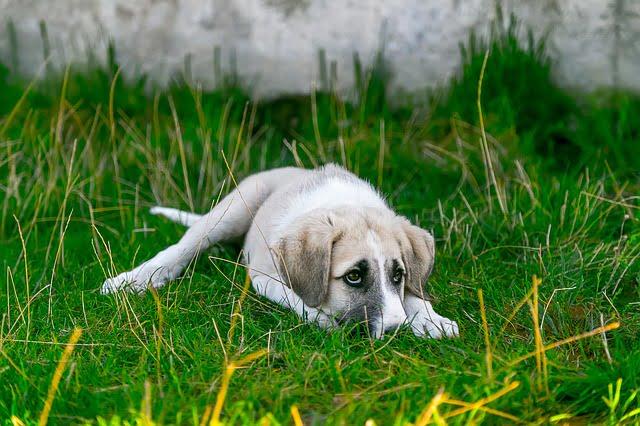 Evcil Hayvanlara İşkence